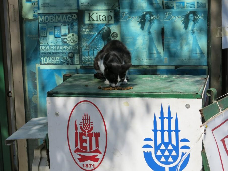 Straßenkatze in Istanbul